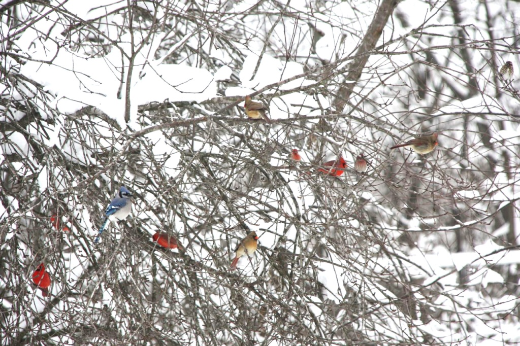 Christmas Blizzard Birds