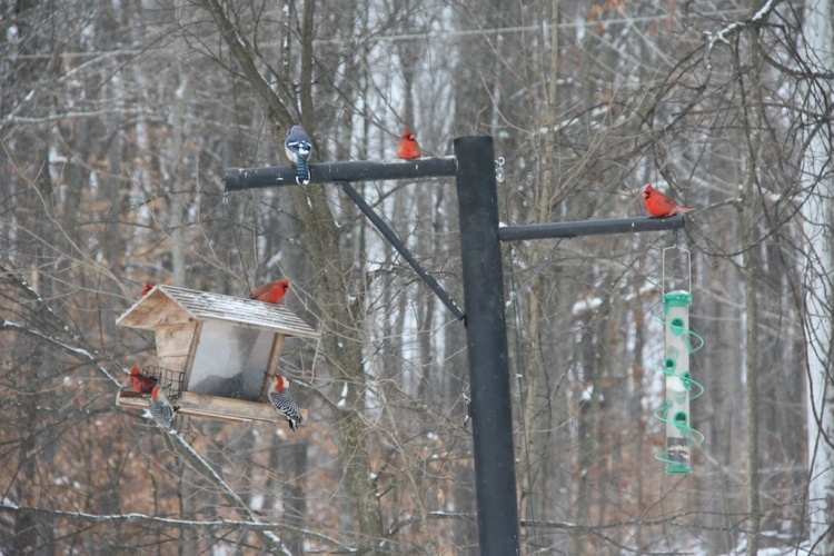 Birds of Winter II 002
