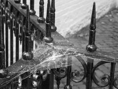 Cobwebs_on_fence
